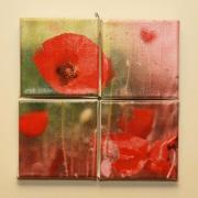 tableau fleurs coquelicot fleur rouge nature : Coquelicot 1