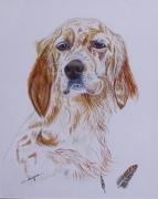 tableau animaux : portraits chiens