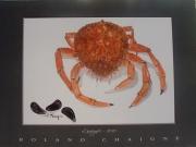 tableau animaux : l'araignée