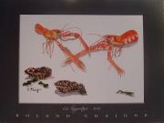 tableau animaux : les langoustines