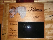 bois marqueterie animaux cheval ardoise bois portrait : PYROGRAVURE CHEVAL HERMES