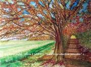 tableau paysages automne couleurs nature balade : COULEURS DE L'AUTOMNE