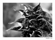 photo fleurs printemps macro : Perception 042