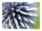 photo fleurs fleur macro campagne : Perception 052
