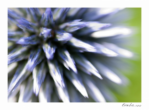 PHOTO fleur macro campagne Fleurs  - Perception 052