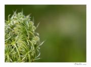 photo fleurs fleur macro campagne : Perception 055
