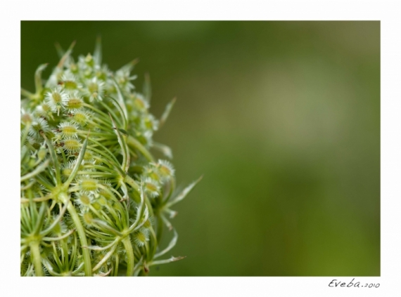 PHOTOGRAPHY fleur macro campagne Fleurs  - Perception 055