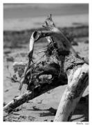 photo paysages corse bois flotte plage : Perception 046