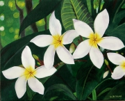tableau fleurs fleurs exotique tahiti antilles : Frangipanier blanc