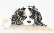 tableau animaux chien animaux fusain : Souvenir de lui