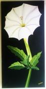 tableau fleurs fleur nature blanc floral : Le Datura