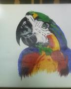 tableau animaux afrique oiseau : Aras