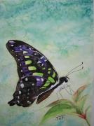 tableau animaux papillon aquarelle collection butterfly : Papillon Noir