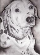 dessin animaux : dalmatien...