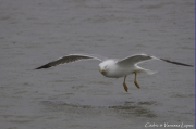 photo animaux oiseaux beautesnature camargue nature : Regard