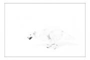 photo animaux chien neige : chien blanc #40