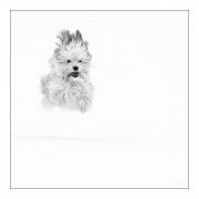 photo animaux chien neige : chien blanc #35
