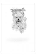 photo animaux chien neige : chien blanc #37
