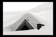 photo animaux oiseau neige montagne chocard : Oiseau nb#02