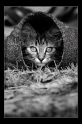 photo animaux chat chats : Chat #01