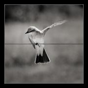 photo animaux oiseau : Oiseau nb#05