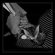 photo animaux chat chats : Chat #03