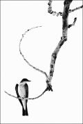 photo animaux oiseau arbre branche : S