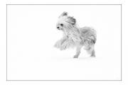 photo animaux chien neige : chien blanc #34