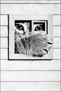 photo animaux chat chats : Fenêtre sur cour