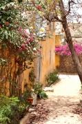 photo paysages fleurs murs : murs fleuris