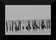 photo marine oiseaux bord de mer : oiseaux