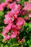 tableau fleurs photo peinture nature fleurs roses : ROSES ROSES