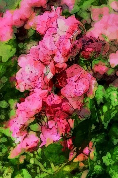 TABLEAU PEINTURE photo peinture nature fleurs roses Fleurs Gravure  - ROSES ROSES