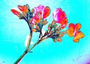 mixte fleurs fleurs rouge : Fleurs rouges