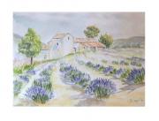 tableau paysages lavande provence : lavande