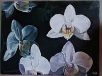 Réveil d'Orchidées