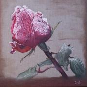 tableau fleurs rose neige froid jardin : Fleur du Creuset