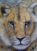 dessin animaux dessin lionne dessin animaux dessin fauves dessin felin : Lionne