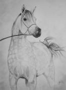 dessin animaux chevaux portrait dessin cheval chevaux : Pur sang arabe