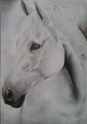 dessin animaux cheval andalous cheval espagnol chevaux : cheval andalous