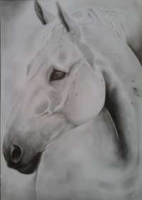cheval andalous