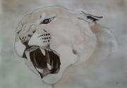 dessin animaux puma fauves felin animaux : puma