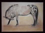 dessin animaux appaloosa cheval western cow boy : appaloosa