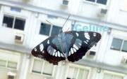 photo animaux papillon nature photo insecte : Papillon en ville