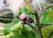 photo animaux nature photo araignee jardin : Minuscule