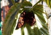 photo animaux insecte photo nature jardin : Les gendarmes en planque
