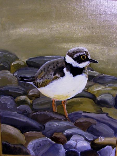 TABLEAU PEINTURE gravelot oiseaux artiste Animaux Peinture a l'huile  - gravelot
