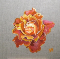 Rose Claudie sur Lin