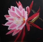 tableau fleurs fleur roseblanc rouge carre : Orchidée scorpion