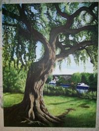 serene willow